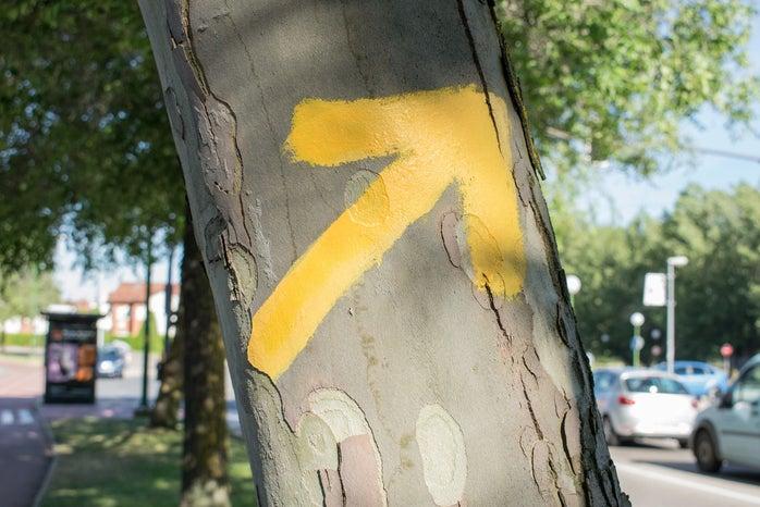 street arrow on a tree in Santiago