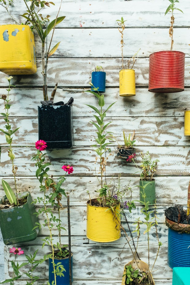 A wall covered by plants in sustainable jars