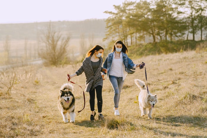 two friends walking big dogs on leashes on a bright grassy hill