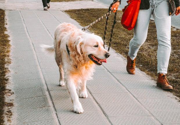 a person walking a golden retriever