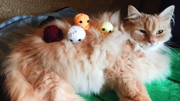 Octopus with cat