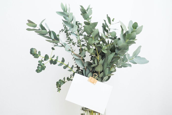 green leafed plant with white printing paper