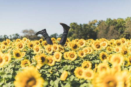 legs sticking out of a sunflower field at daytime