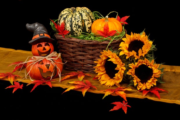 fall decor and assorted pumpkins
