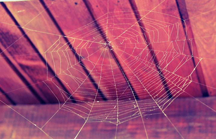 spiderweb on a wooden ceiling