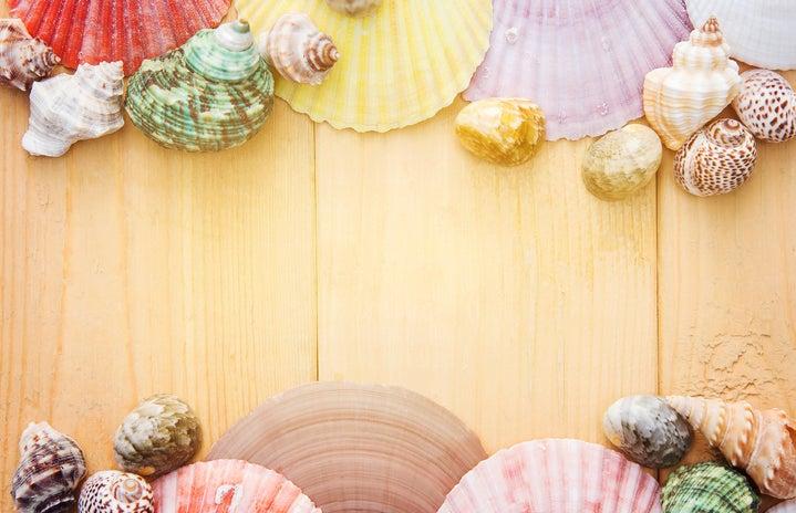 assorted sea shells on wood