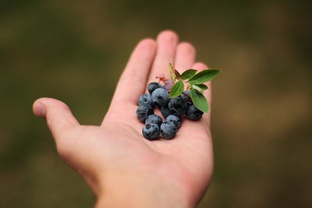 hand holding fresh blueberries