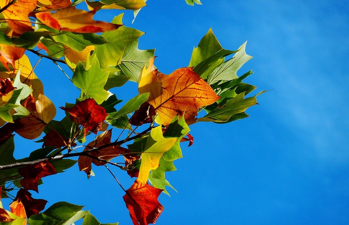 Low angle shot of autumn leaves against a blue sky