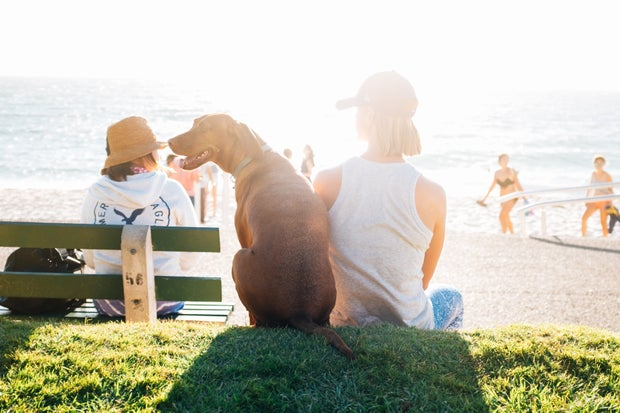 short-coated brown dog sit beside person wearing white tank top near beach during daytime