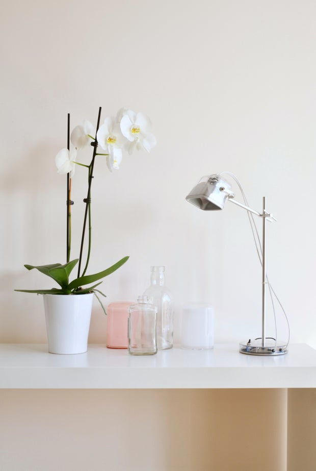 Orchid on desk
