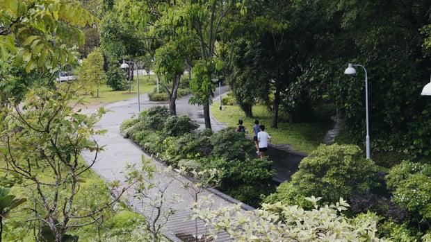 rain forest park