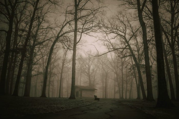 creepy brown and white picture of the woods