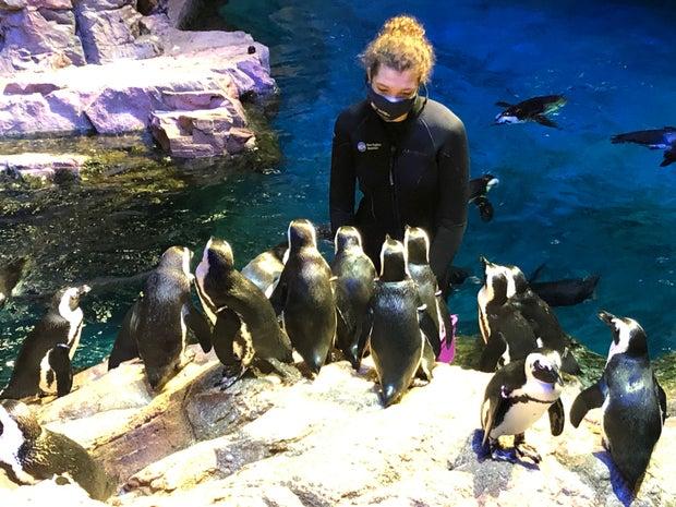 Woman feeding penguins