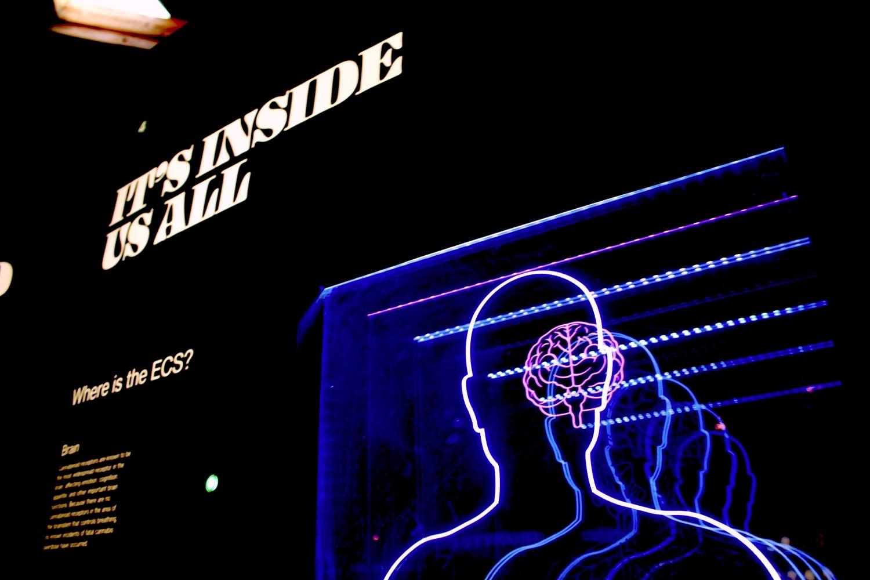 Brain neon sign