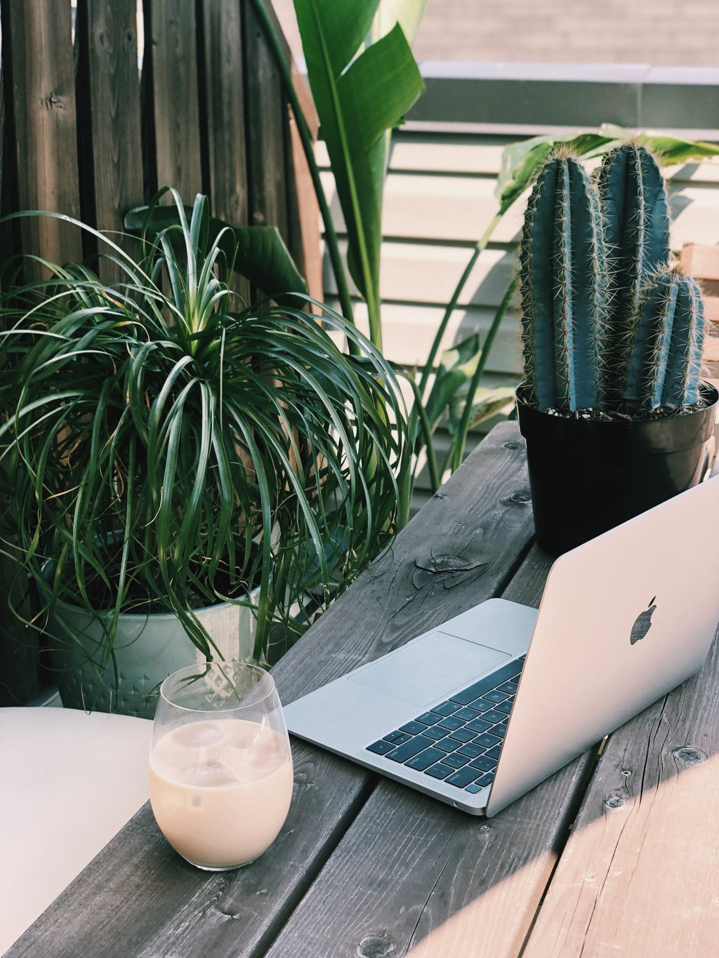 laptop with plants