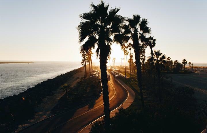 california, beach, palm trees, sunset