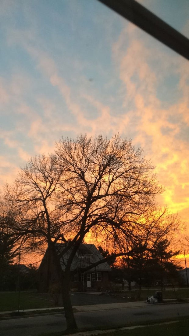 orange and blue sky with tree in center