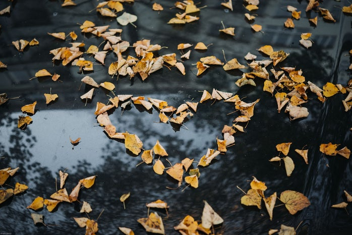 Heart made out of fall leaves.