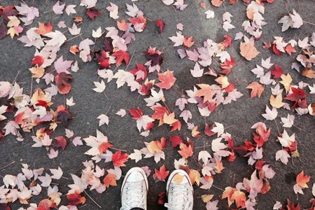 fall leaves on the ground