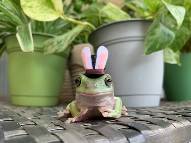 Frog in bunny hat surrounded by plants