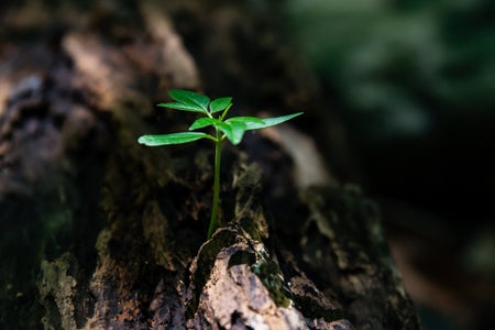 selective focus photo of a green plant seedling on a tree trunk
