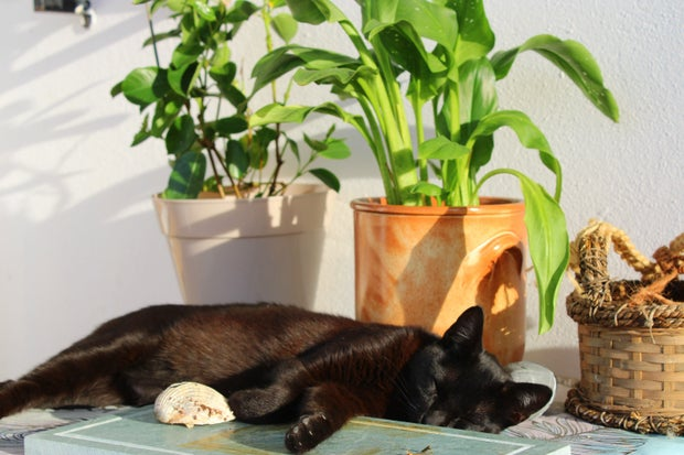 Black cat with plants