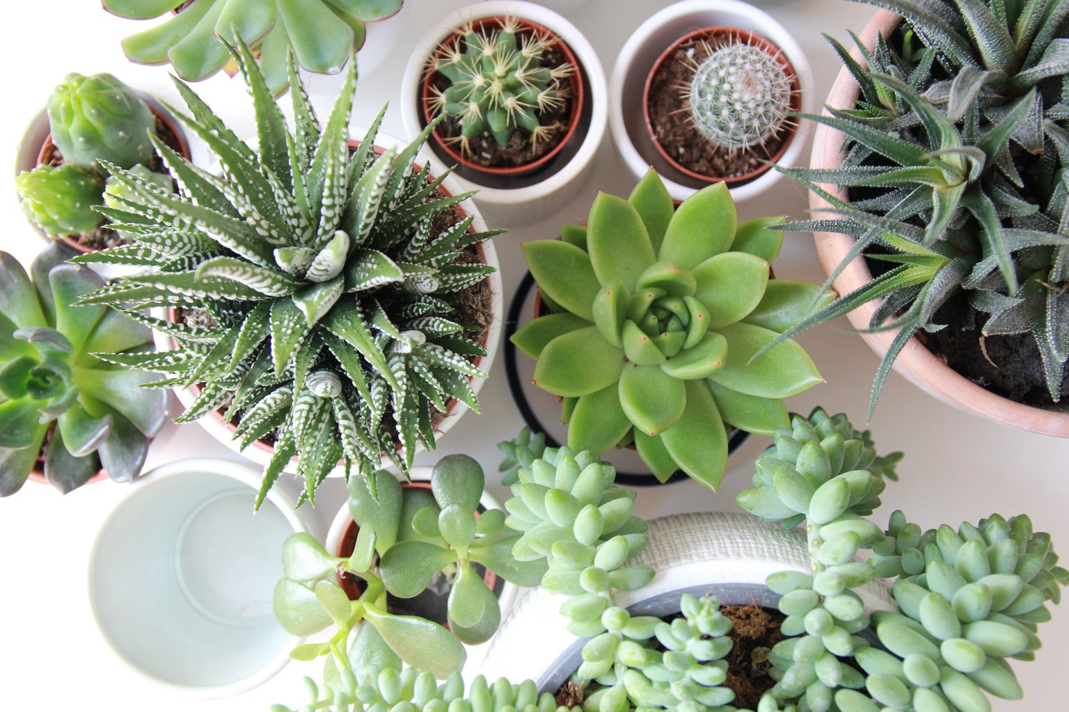 Succulents assorted in pots