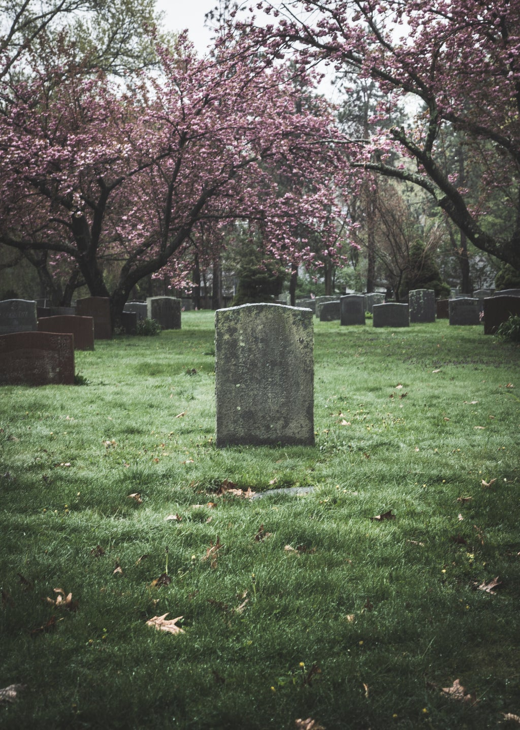 gravesite surrounded by blooming trees