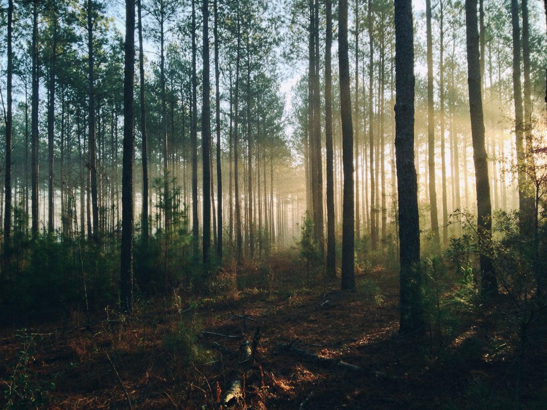 Misty forest unsplash