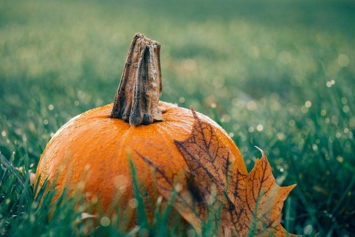 Pumpkin Grass