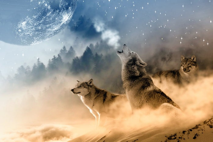 three wolves, one of which is howling at the moon.